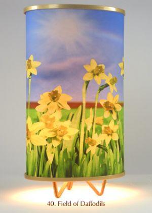40. Field Of Daffodils